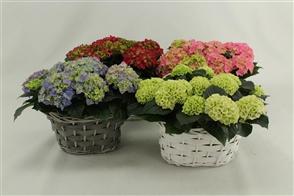 plantes valorisées intérieur