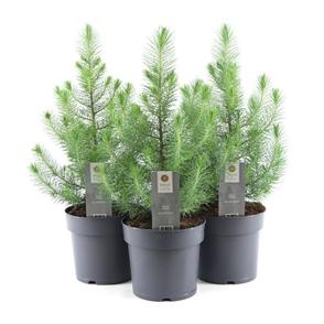 pepinière arbustes et arbres