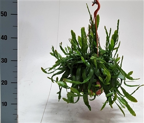 plantes en suspension